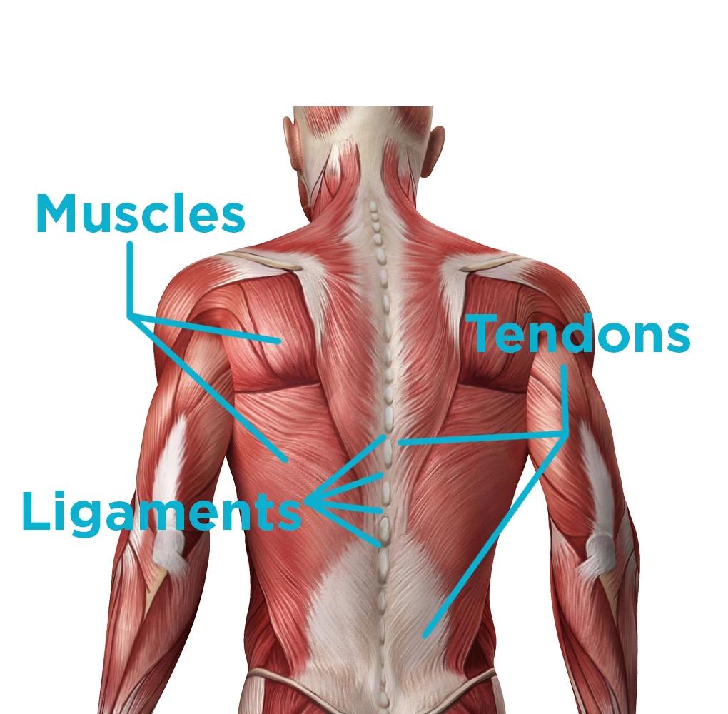 Lower Back Strain by Using CBD
