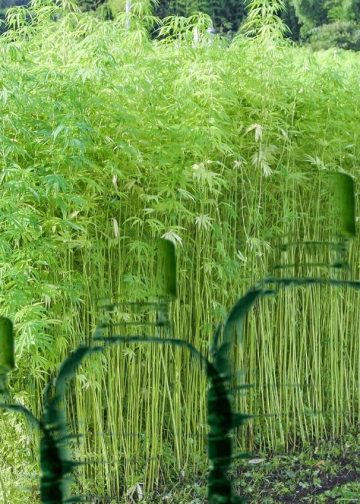 Hemp Plastic: What Is It and How Does it Make