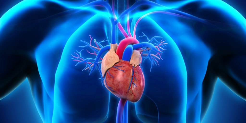 CBD Effects Heart Arrhythmia And Cardiovascular Heart Disease