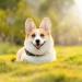 CBD Using For Dog Allergies