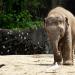 CBD Oil Affects Elephants