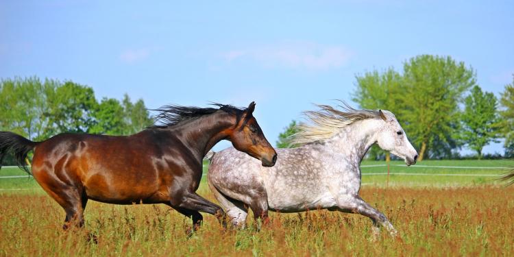 CBD Oil For Horse