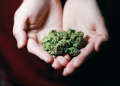 7 Places to Live in if You Love Weed