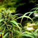 28 Surprising Scientific Benefits From Cannabis You Probably Didn't know