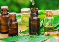 Importance of CBD Oil Products in Marketing