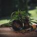 4 Skincare Benefits of Hemp Seed Oil