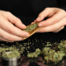 How to Roll a Joint Fast and Easy, Rolling a Joint Guide